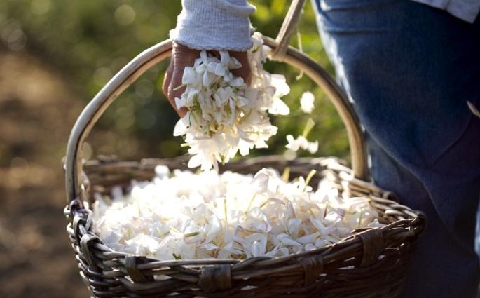 1 jasmine a